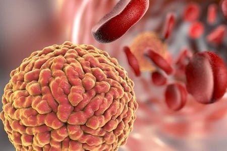 бактерия и лейкоциты