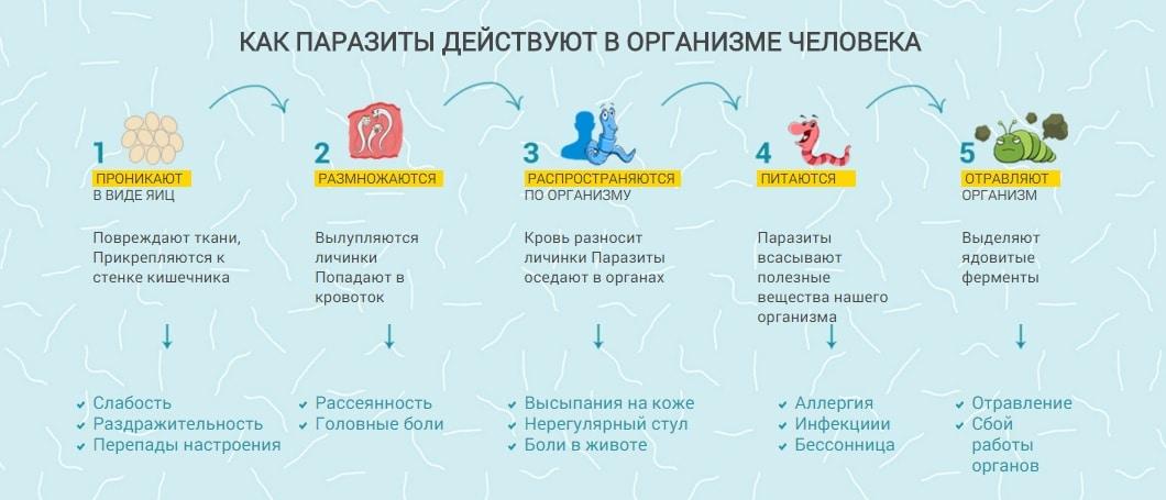 Как действуют паразиты в организме человека