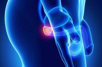 Что собой представляет и где находится простата у мужчины (о симптомах и лечении с фото)