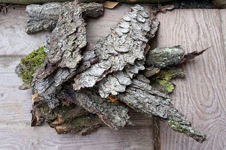 Лечение простатита корой осины в домашних условиях: рецепты и лечебные свойства
